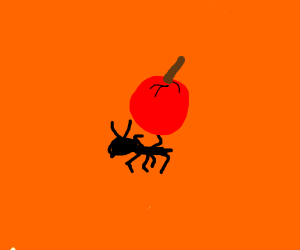 Ant lifting a tomato