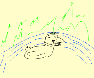 a duck in the water