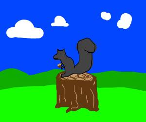 squirrel sitting on chopped tree