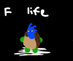 depressed sonic turtle