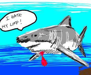 A shark business man