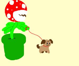 Pirhana Plant has a puppy helper
