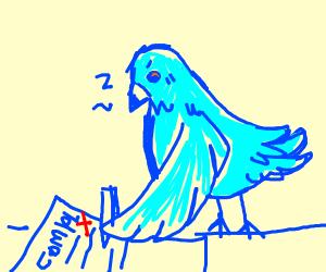 blue pigeon writes a complaint