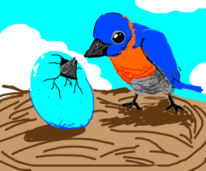 cute little blue bird's egg is hatching <3