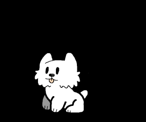 black backdrop with white fluffy dog
