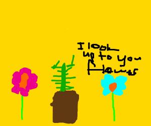 cactus worshiping flowers
