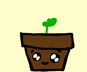 Kawaii pot with little sprout