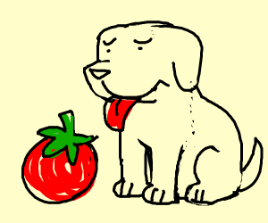 Dog does not like tomato