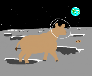 cow chasing a cookie on the moon