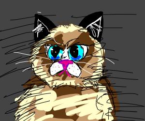 Grumpy Cat Judges Your Soul