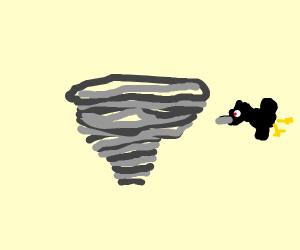 Bird in a Tornado