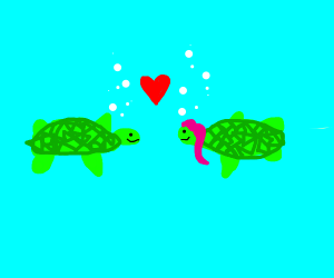 Turtles in love, one is tsundere