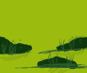 Disgusting swamp