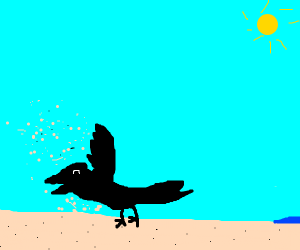 Crow playing in the Sand