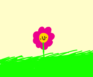 a silly flower