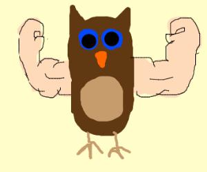 Buff owl