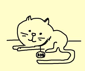 Bob, the cat