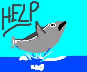 Dolphin needs help