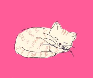 Tabby ginger cat naps