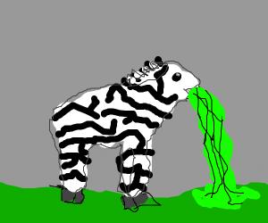 puking zebra