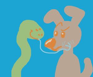 Snake licks Dog