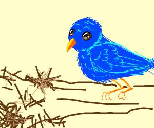 Bird looking at destroyed nest