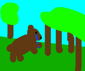 sad bear in forrest