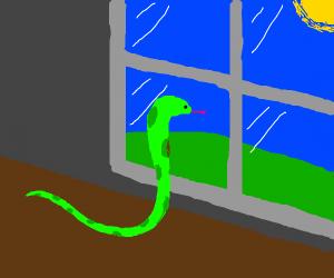snake looks outside window