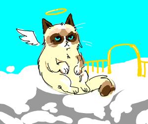 Grumpy cat complaining in heaven