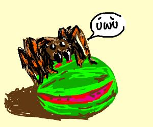 Watermelon eating Tarantula