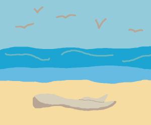 Stick an beach