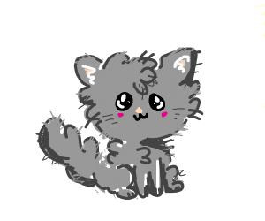 Fwuffy wuffy kittee kat