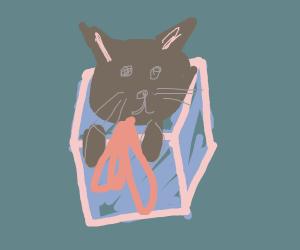 cat in present