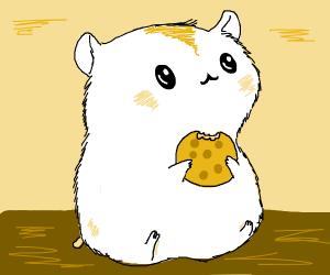 cute hamster eating a cookie :3