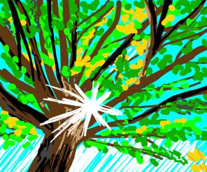 oak tree on a sunny day