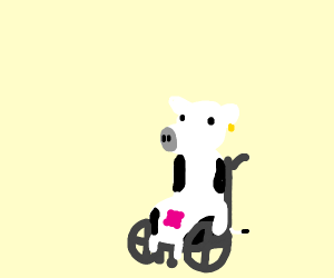 Disabled cow