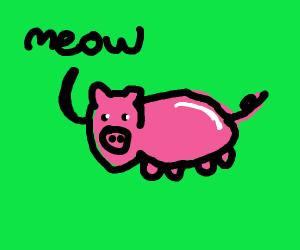 pig saying meow