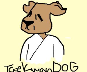 sensei dog