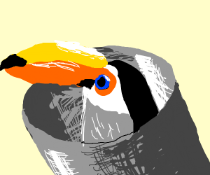 Can + Toucan