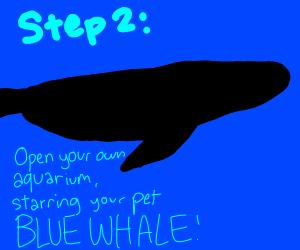 step 1: buy a pet blue whale