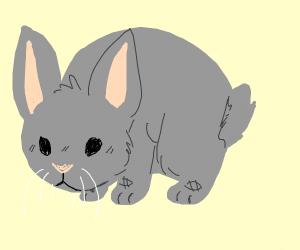 the world cutest bunny