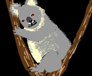 Evil coala