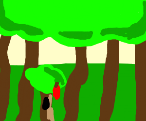 Inspirational Forest
