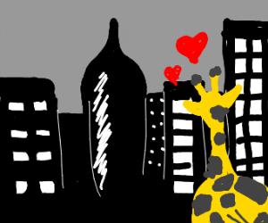 giraffe loves NYC