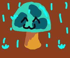 happy mushroom glistening in the autumn rain