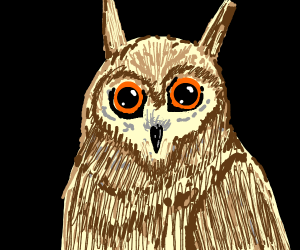 Owl suffer from insomnia