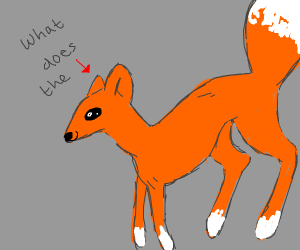 What does the fox?