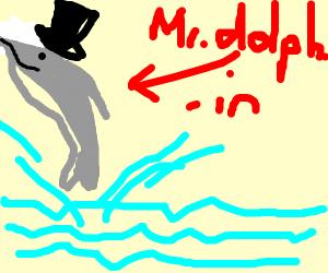 Mr. dolphin