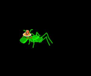 Mexican Cricket