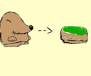 a potato turning into a kiwi
